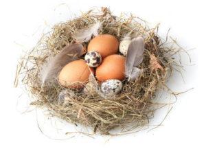 Перепелиные и куриные яйца