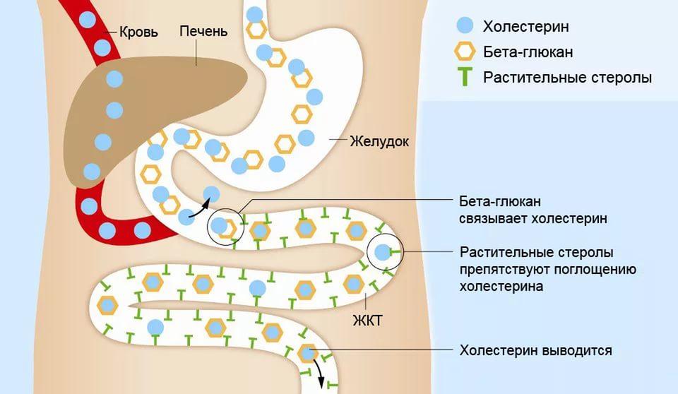 Бета липопротеиды