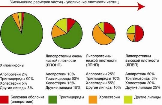 Классы липопротеинов