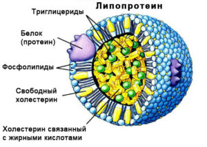 Липопротеин