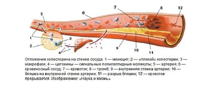 Структура холестерина