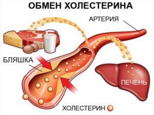 Холестерин вырабатывается в печени человека