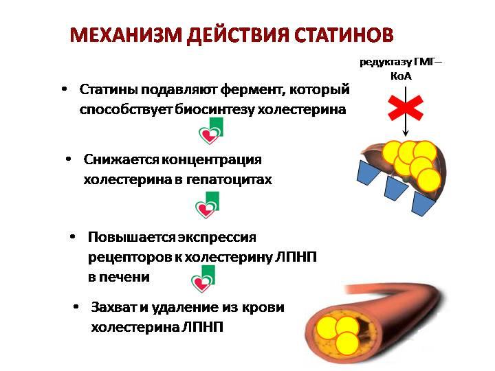 Фармакологические характеристики