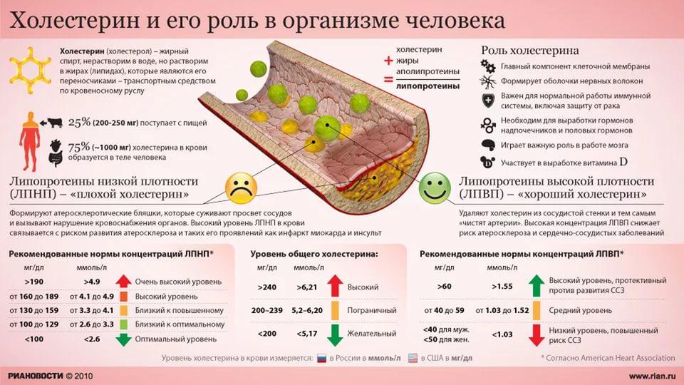 Значение холестерина для организма