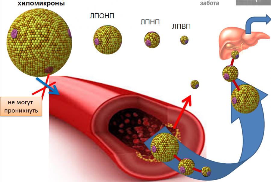 Хиломикроны в крови