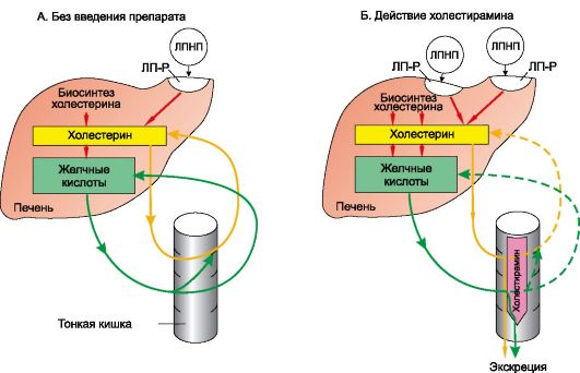 Секвестранты желчных кислот