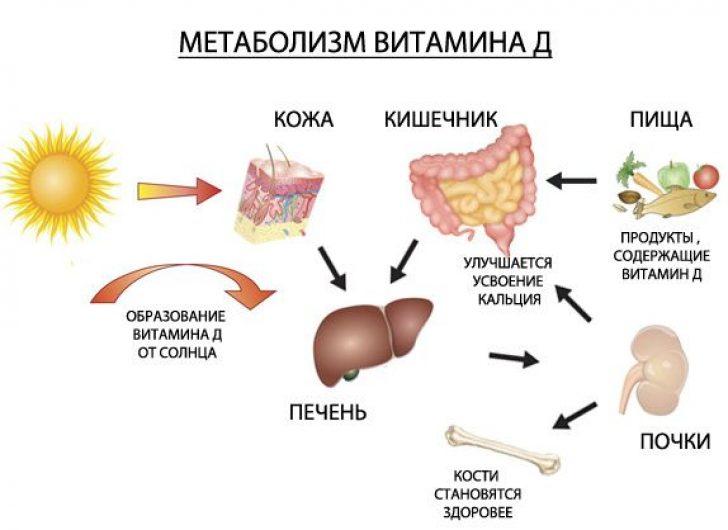 Выработка витамина Д