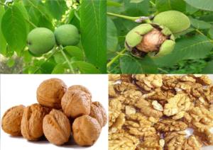 Витамины грецкого ореха