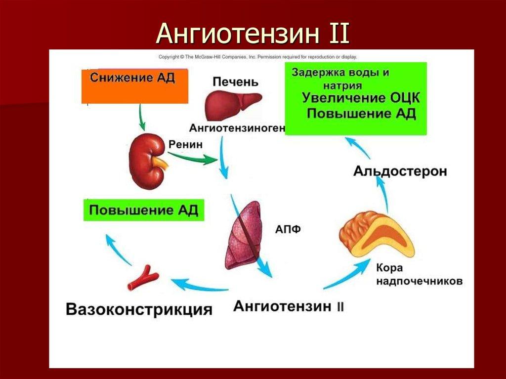 Ангиотензин II