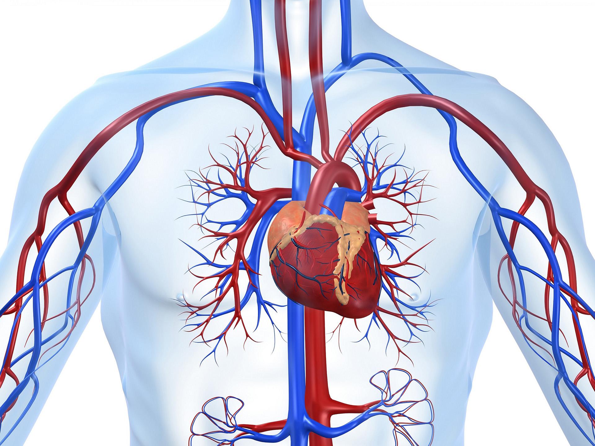 Негативные процессы сердечно-сосудистой системы