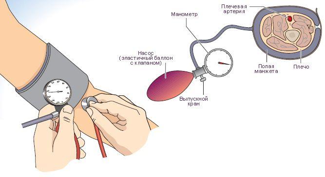 Стетофонендоскоп на проекцию локтевой артерии