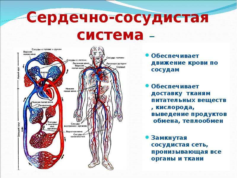 Лекарственный медикамент кардиологического свойства Соталол