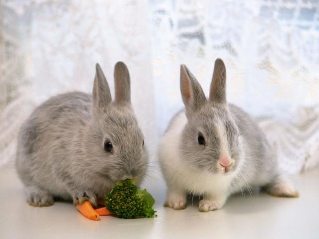 Исследования на кроликах