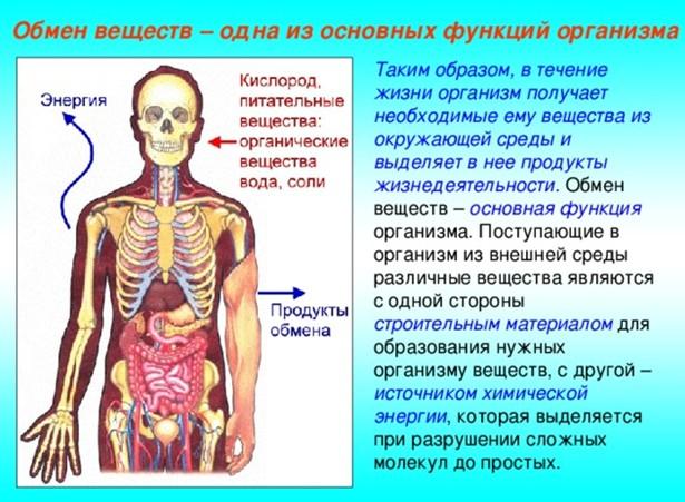 Воздействие на обменные процессы в организме