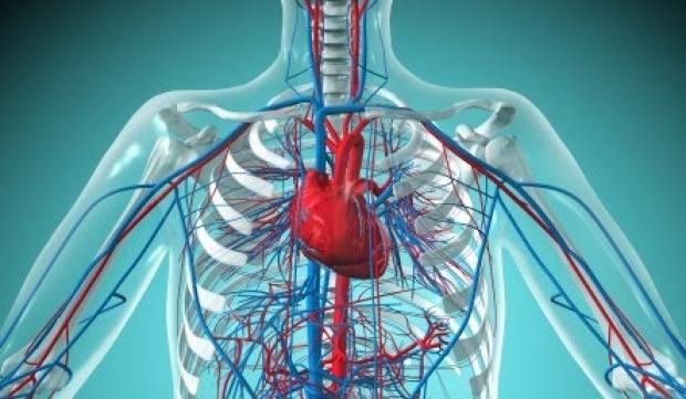 Проблемы с работой нервной или сердечно-сосудистой системы