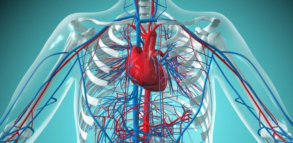 Хронические недуги сердечно-сосудистой системы