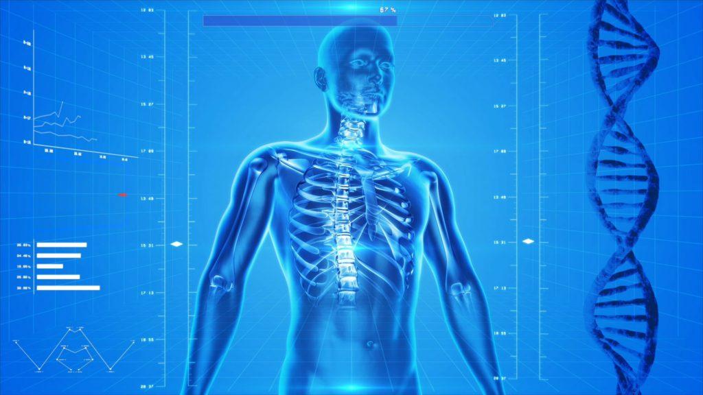 Функционирование организма человека