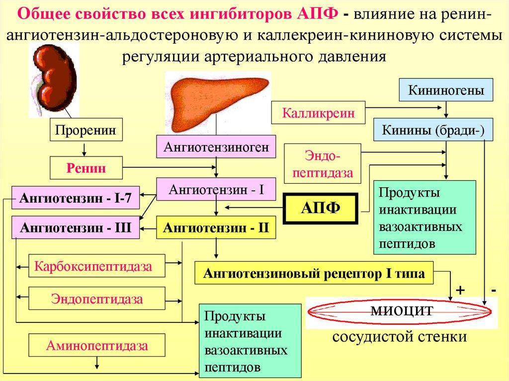 Ингибиторы АПФ