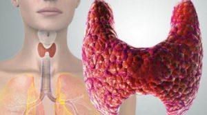 Изменения в работе щитовидной железы